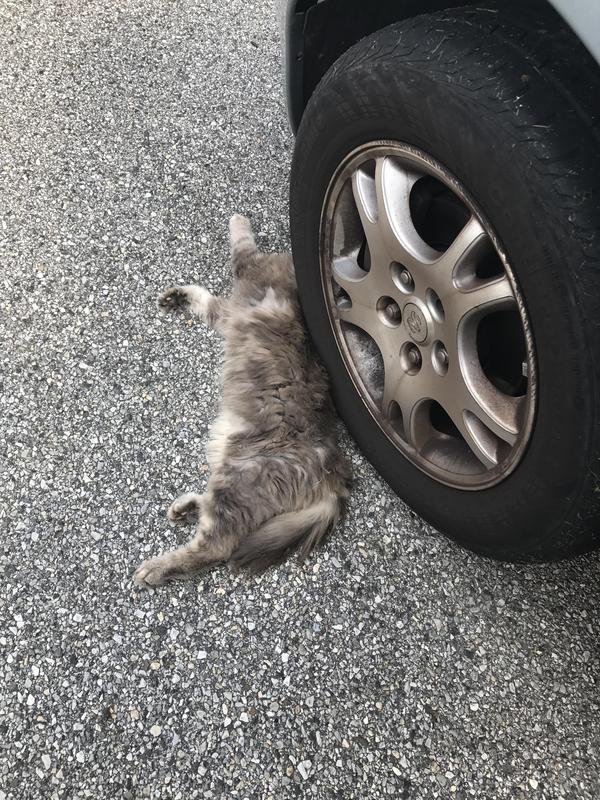 Шёл сегодня на работу и ужаснулся фотография, кот, авто, колесо, длиннопост