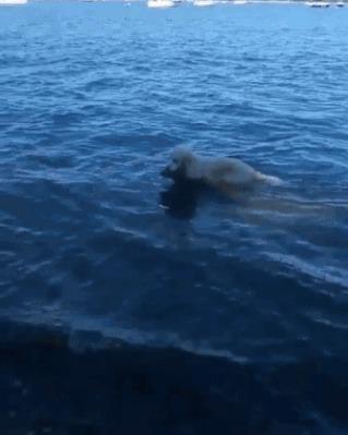 Собака спасает тонущего олененка