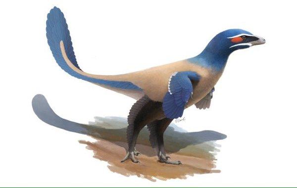 В Канаде обнаружили новый вид динозавров. Они выглядели как гигантские голуби палеонтология, динозавры, открытие, наука, биология