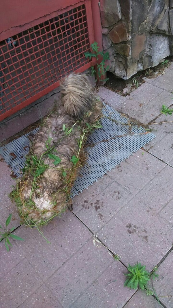 Когда тебя ведёт дорога приключений, но ты не очень сообразительный Собака, трава, удивление, стремительный, бег