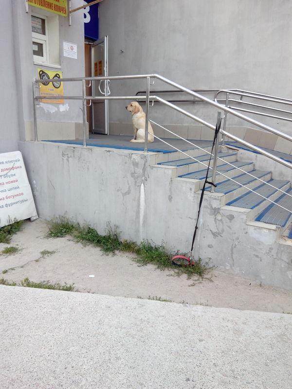 Когда не удержит поводок))) Собака, ждун
