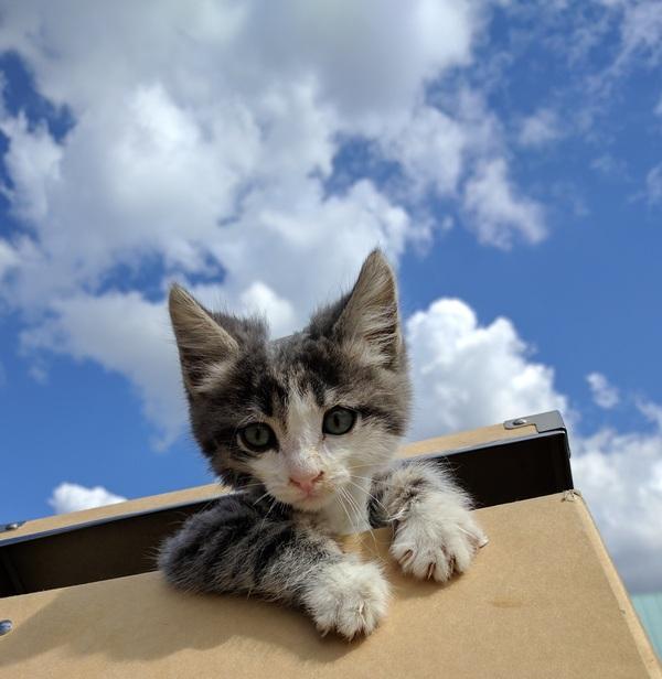 Коты на передержку москва