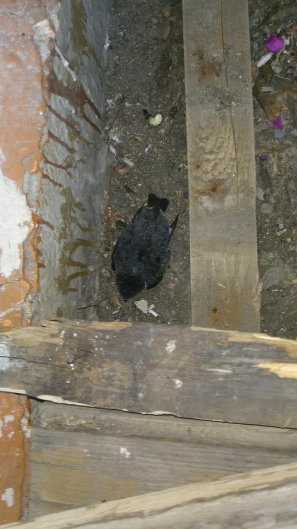 Гнездо что за птица?, птицы, гнездо, что с ними делать