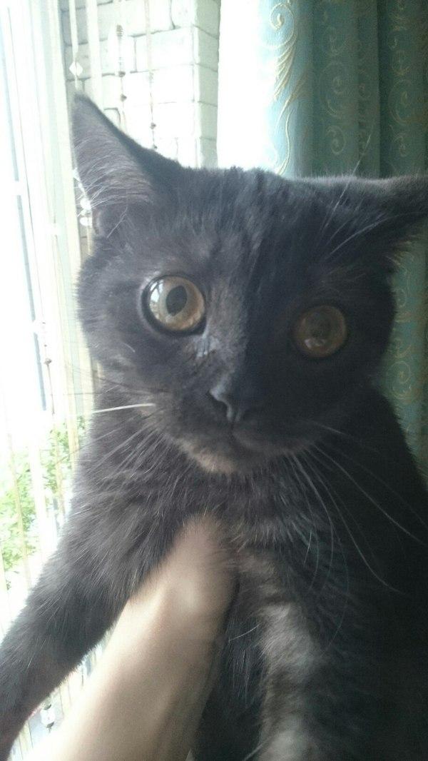Найдена кошка. Краснодар. найдено животное, кот, краснодар, ищем владельца, потеряшка, длиннопост, помощь животным