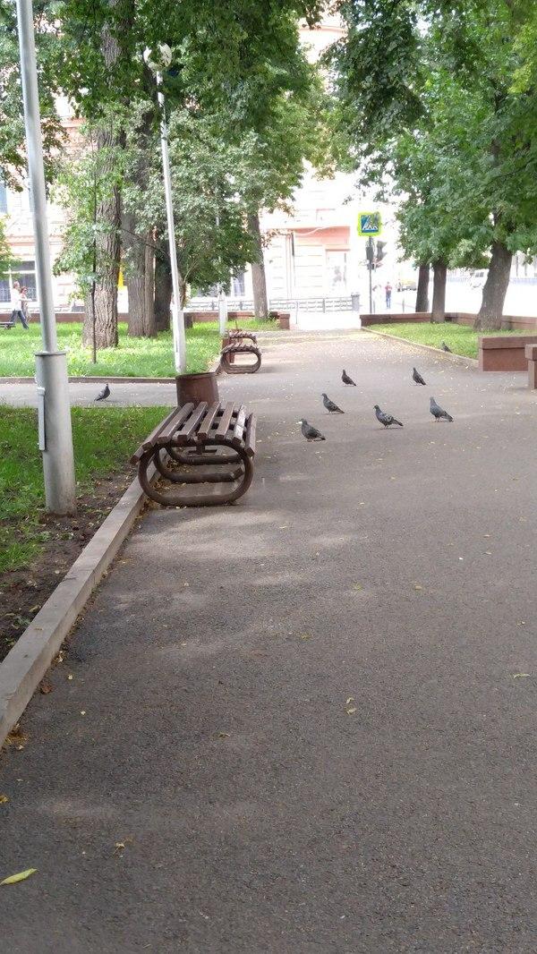 Гулял по улице и увидел что эти господа явно что-то замышляют...