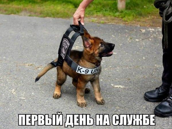 Страж порядка