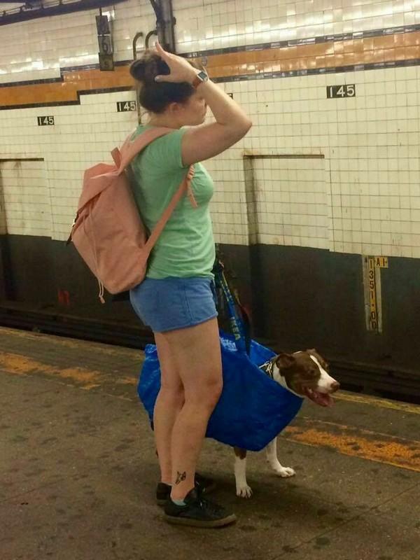 В Нью-Йорке, в метро, вы можете провозить собаку, только если она помещается в сумку