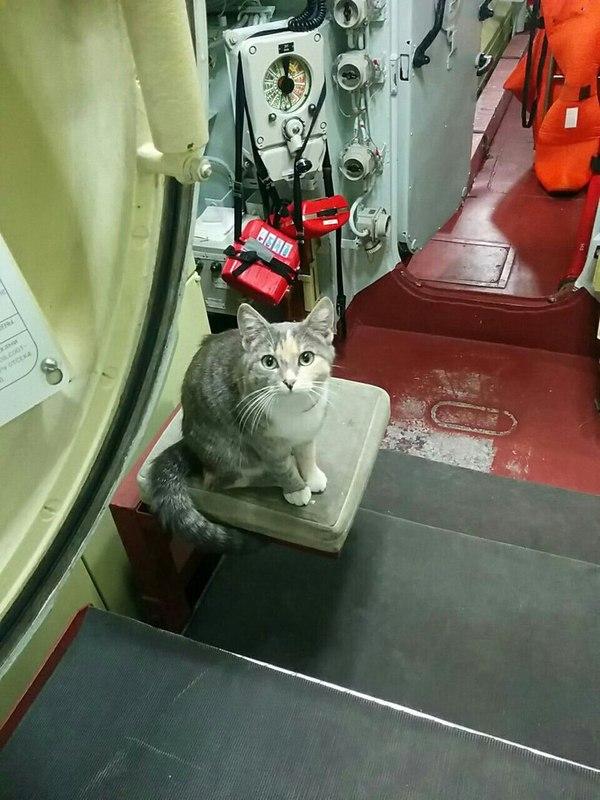 Подводная кошка Муся. Подводная лодка, Кот, Варшавянка, Кто кинул котана на пульт, Длиннопост