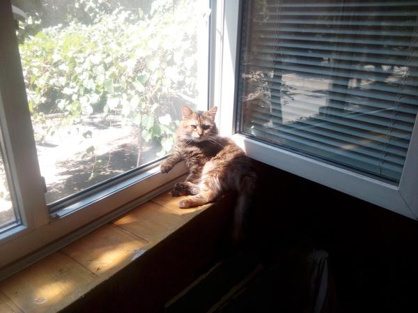 Моё Кошарко )) кот, трехцветная кошка, позитив, фотография, моё