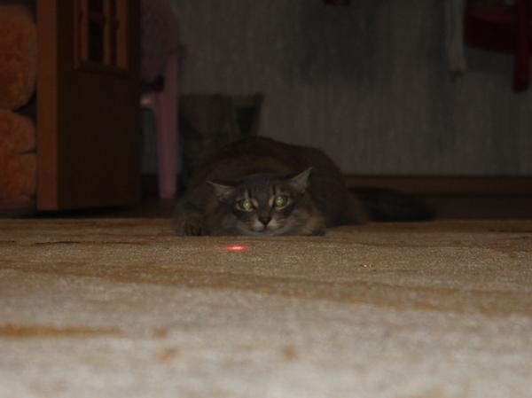 Затаившийся кот, охота, Лазерная Указка, моё