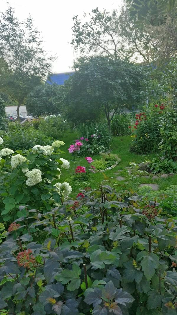 """К теме """"просто поделиться"""" Полисадник, цветы, двор, красота природы, Пенсионер, длиннопост"""