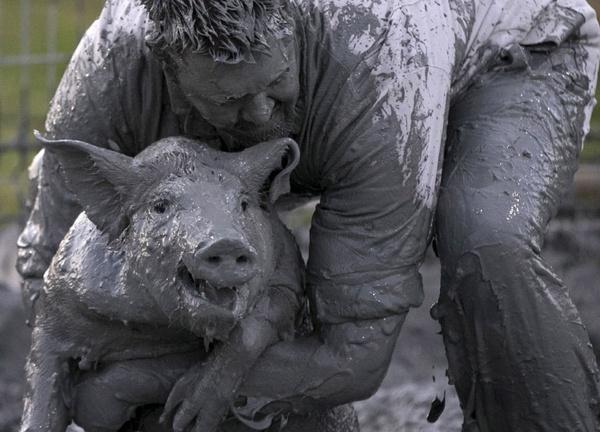 Welcome, Петро Олексийович! Украина, Политика, Канада, свинья, грязь, 404, традиции, баян