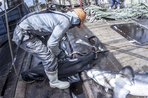 Большая Рыбалка рыболовство, моряк, промысел, добыча, Рыбак, рыболовное судно, Морская жизнь, траулер, длиннопост