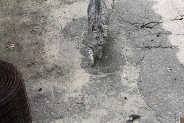 """Мой личный """"Котоленд"""" 86 кот, Липецк, приют, помощь, добро, котоленд, длиннопост"""