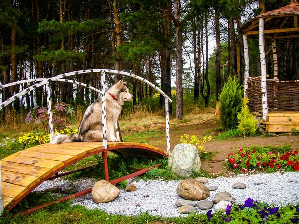 Познает дзен.... собака, Аляскинский маламут