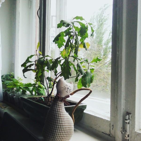 Дуб на окне