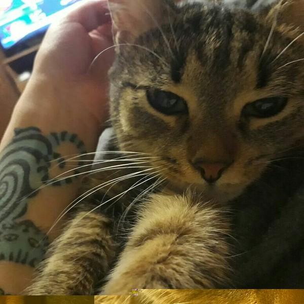 Соня. кошка нашла дом, выросла, Соня, Милота от кошки, длиннопост, кот