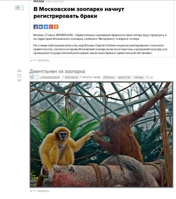 Совпадение? зоопарк, брак, совпадение, свежее, новости
