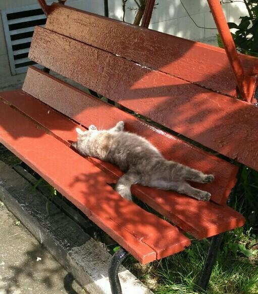 Котик в Адлере Кот, Позитив