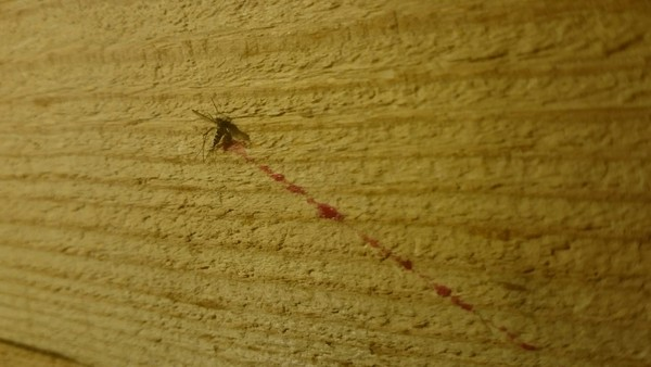 Комар превысил скорость и убился об стену Фотография, Картинки, Комары, Смерть, Авария, Юмор, Жесть