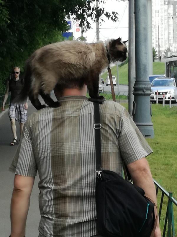 Если с другом вышел в путь... Кот, Прикол, Юмор, Правда, Длиннопост