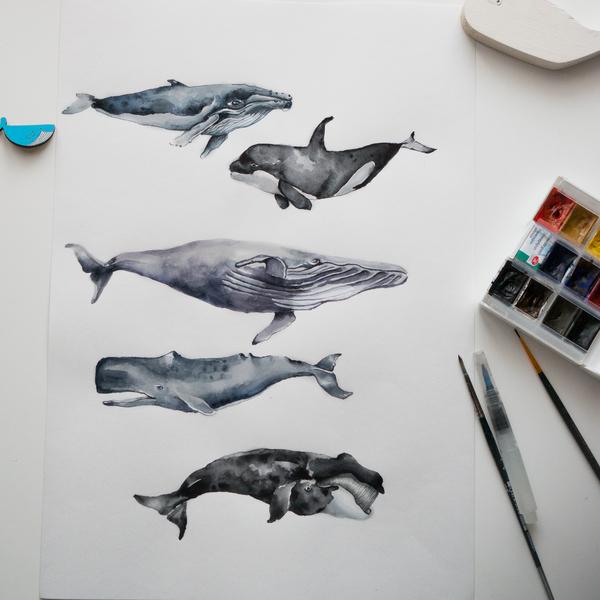 Киты. Акварель. Акварель, Кит, Кит-Убийца, Синий кит, Горбатый кит, Длиннопост