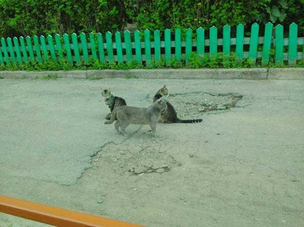Кошачья мафия в моем дворе Котомафия, Фотография, Кот