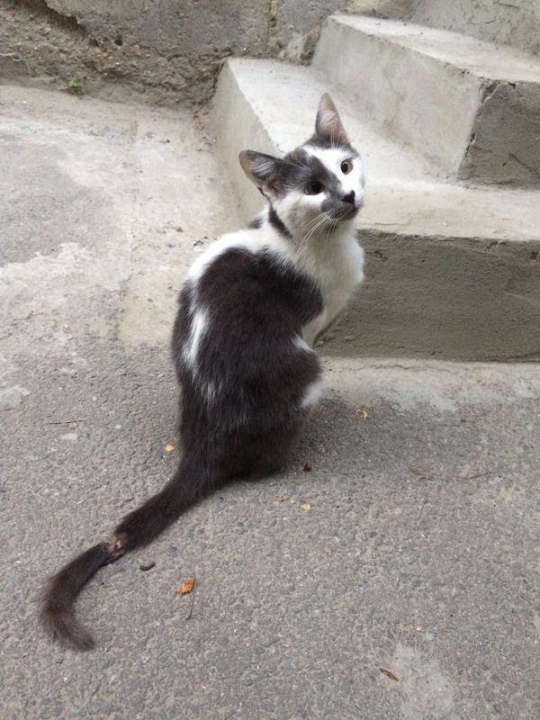 Кот обижается когда мы уходим