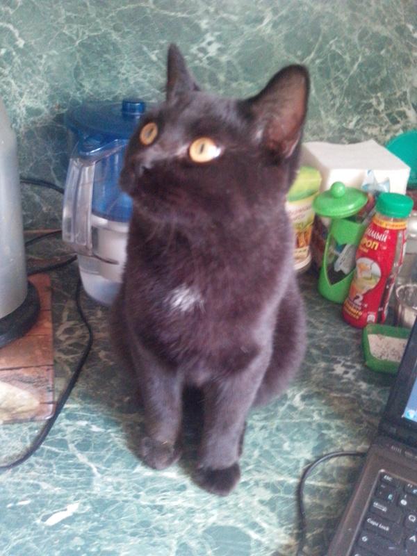 Найден котик Кот, Потеряшка, Мытищи, отдам в хорошие руки, длиннопост
