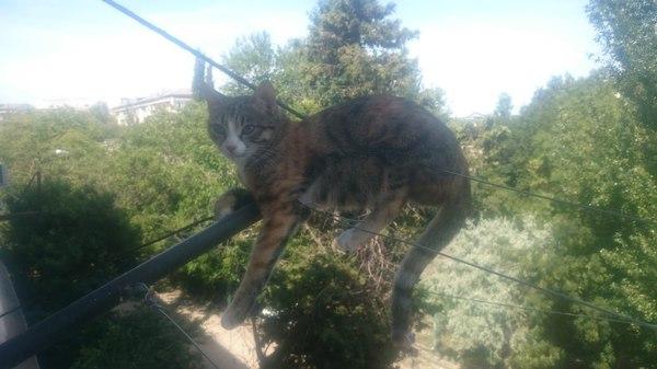 Да просто в квартире и полежать негде. кот, удобно, балкон, высота