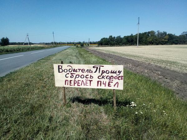 Не гони Ростовская область, мед, пчелы