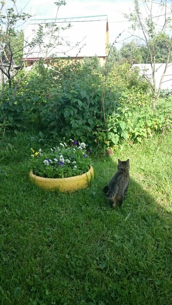 Когда кто-то непонятный пришёл на твою территорию кот, Ёжик, дача, Природа, длиннопост