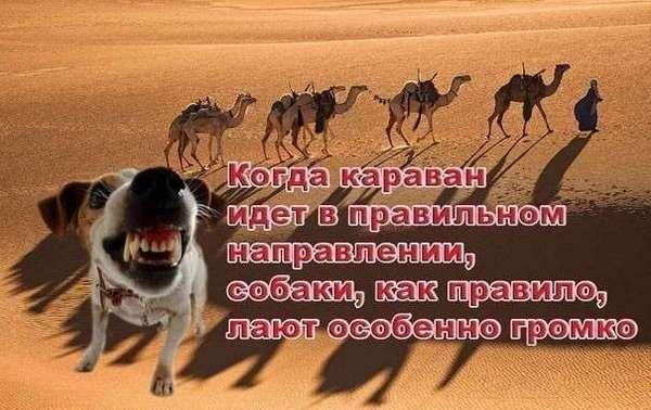 1501703782194972149.jpg