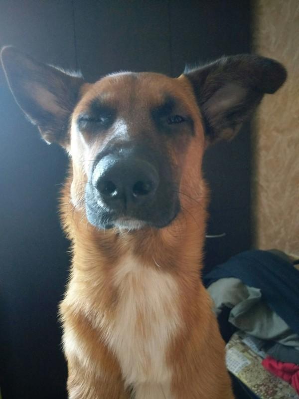 Рефлекс))) Собака, Милота, Сонный, Рефлексы