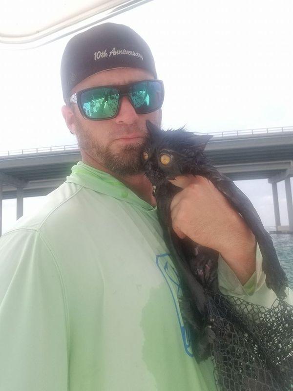 Капитан яхты спас тонущего кота новости, кот, Спасение, США, флорида