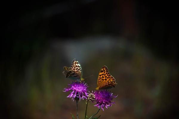 Бабочки бабочка, фотография, Природа