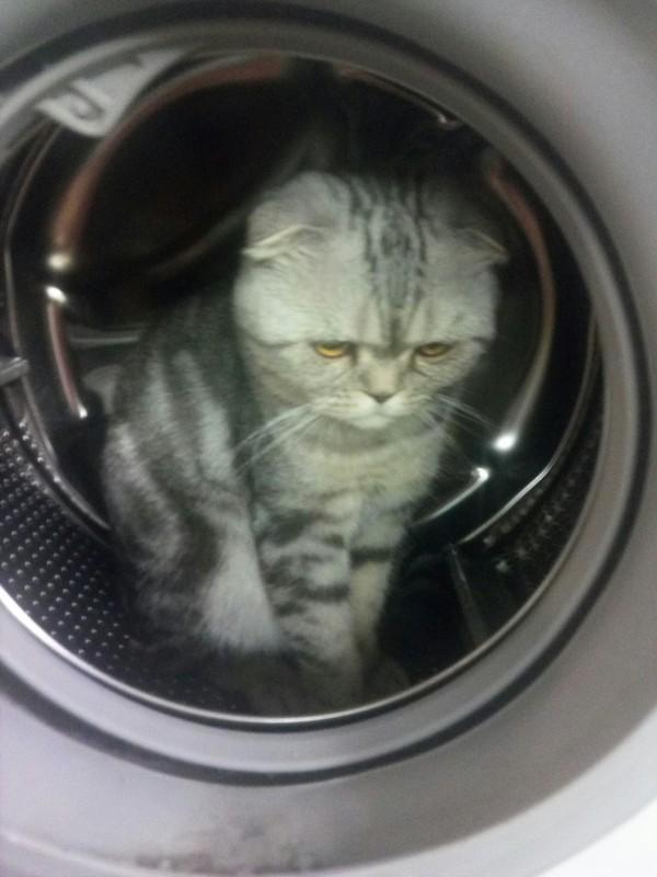 Поехали! Кот, Вислоухий кот, Ловушка для кота, Длиннопост