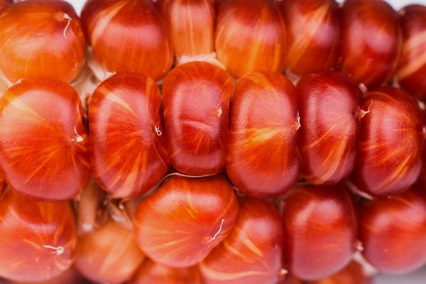 Красивая кукуруза :) кукуруза, красивое, оранжевое, садоводство