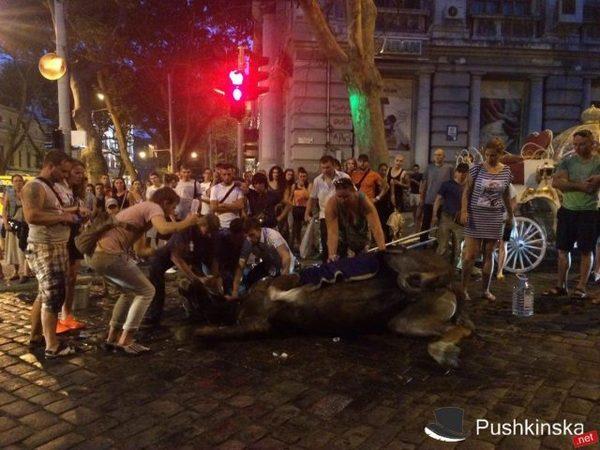 В Одессе лошадь упала в обморок от жары Одесса, Лошадь, Жара, Видео, Длиннопост, Украина