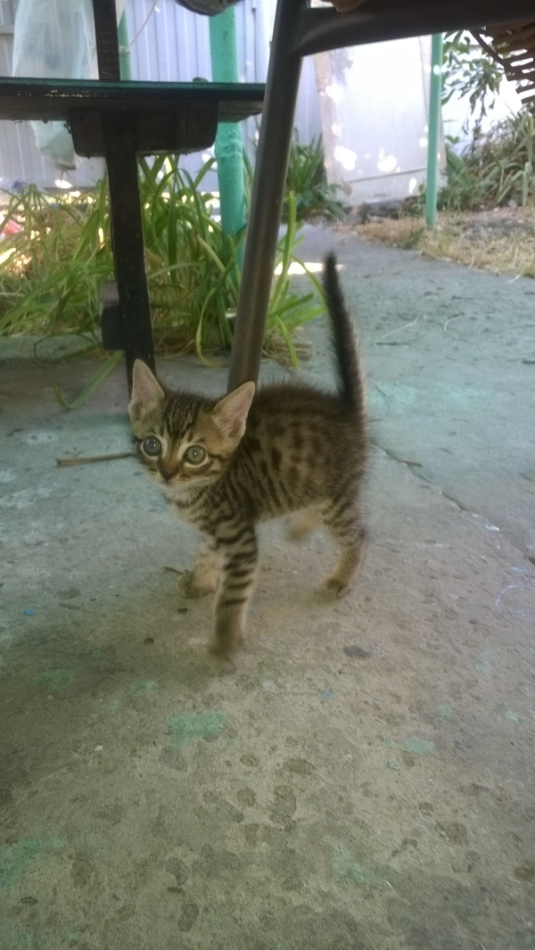 Коржик котенок нашел семью, в добрые руки, кот, добро, традиции, длиннопост