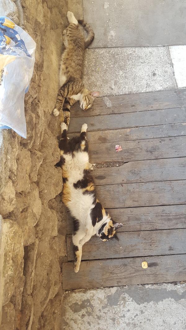 Нарушение гравитации из-за жары... Кот, Спят, Прикол, Длиннопост