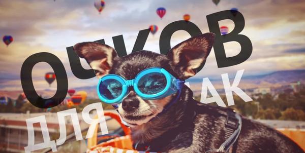 Топ-5 необычных бизнес-идей Идея, бизнес, стартап, робот, собака, очки, кот, часы