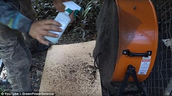 Пес в качестве приманки: мужчина показал, как убивает до 4000 комаров каждую ночь комары, вентиляторы, находчивость, приспособление, москитная сетка, Собака, приманка, ловля на живца, длиннопост