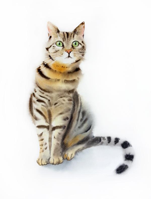 World Cat Day сегодня. Акварель.