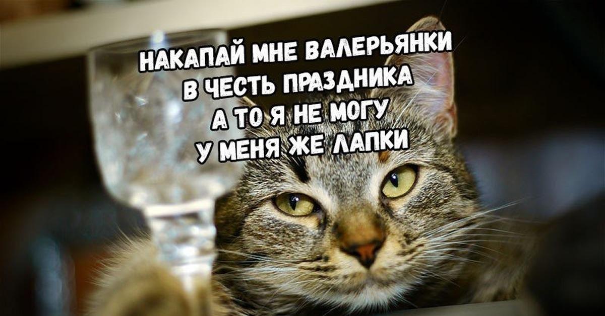 Международный день кошек 8 августа картинки со стихами, смешные картинки ураза-байрам