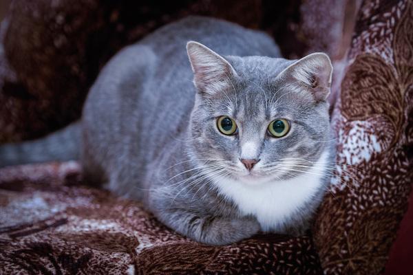 Просто красивый кот моё, кот, качественное фото, усы