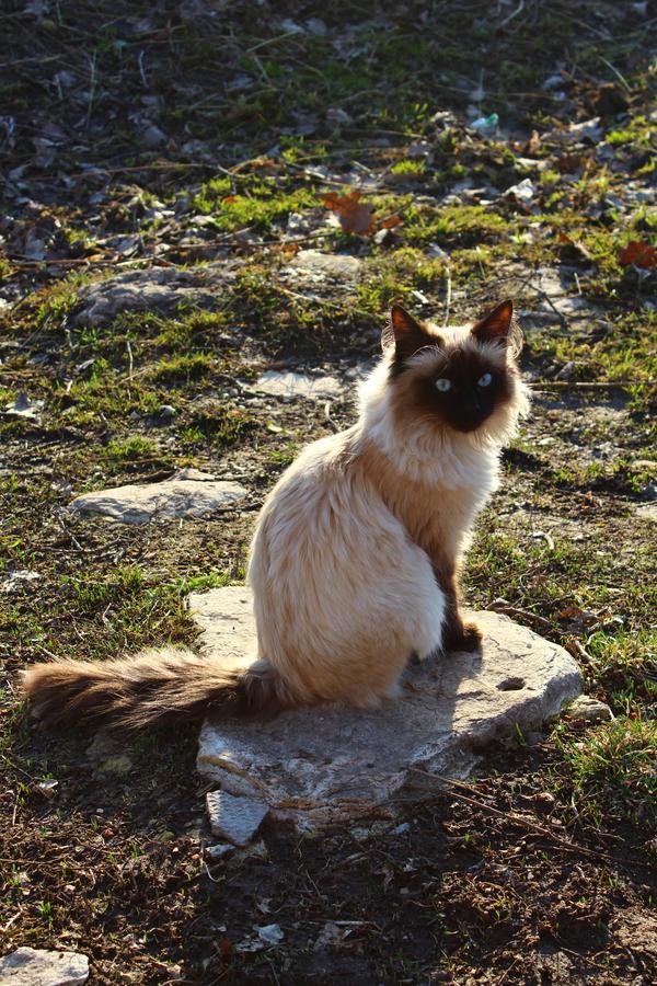Озадачен кот, весна, невская маскарадная