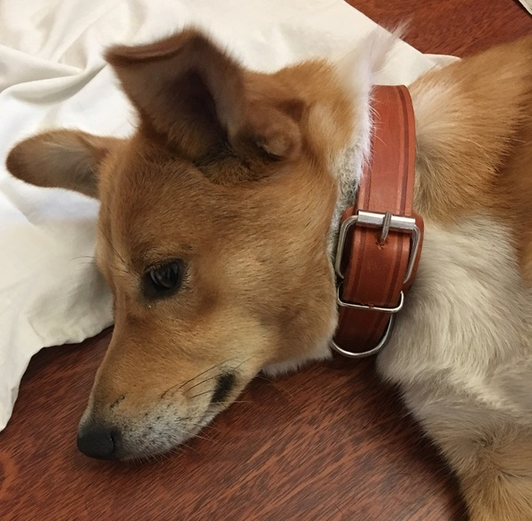 Найдена собака, отдадим в добрые руки! Москва-МО найдена собака, Помощь, в добрые руки, Москва, помощь животным, длиннопост