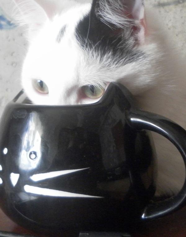 Я тоже хочу лакать чай. И задумчиво смотреть в безысходность