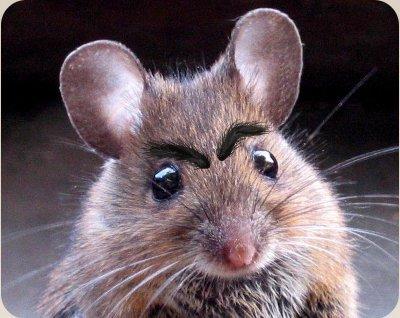 Не страшно мышь, женщина